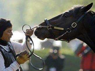 Стоимость акций британских букмекеров падает из-за лошадиного гриппа